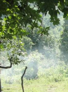 cropped-jungle-panna.jpg